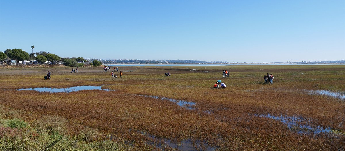 Kendall-Frost Mission Bay Marsh Rese
